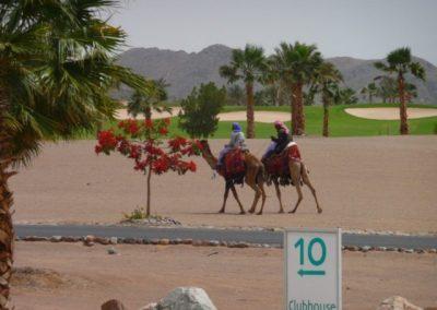 Egypt 2010 (49)